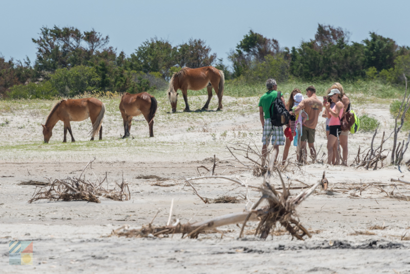 Shackleford Banks horse viewing