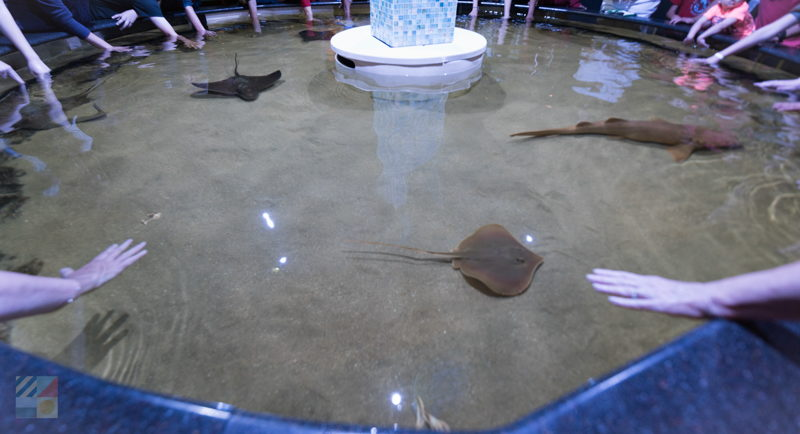 Exhibits at N.C. Aquarium at Pine Knoll Shores